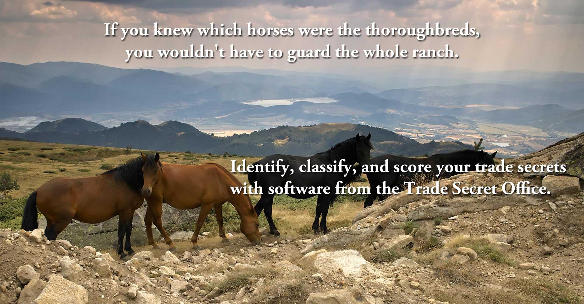 If you knew which horses were the thoroughbreds, you wouldn't have to guard the whole ranch.